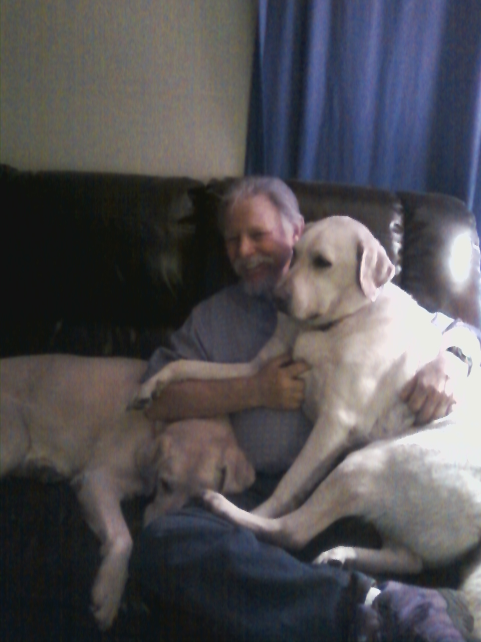 Retired Guide Mobley raised by Nick and Gail Meinert. He's turned into a big lapdog in his retirement