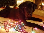 Peggy at Christmas