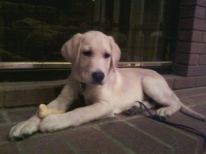 Baby Kelton