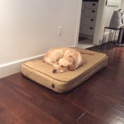 Kelton on his new bed at his forever home