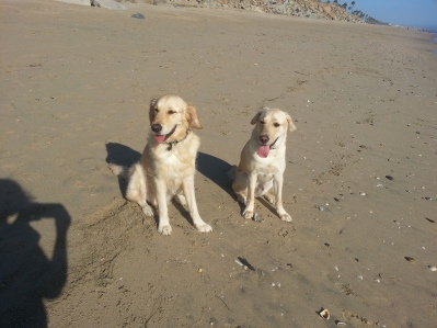 Petey and Kelton at the HB dog beach