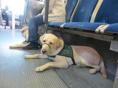 Kelton on the bus