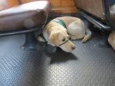 Kelton on the Knotts Berry Farm Train