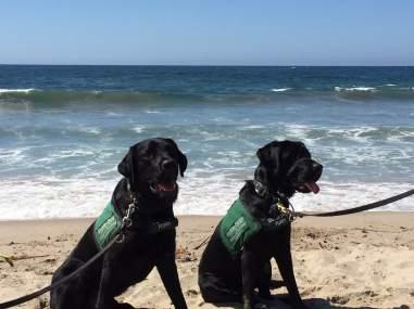 Siblings: Buckley and Brody at Santa Monica Pier