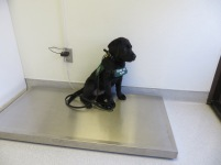 At the vet