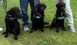 Siblings: Buckley, Brianna, Bella