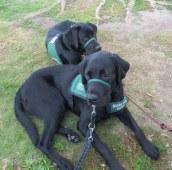 Siblings: Buckley and Bella