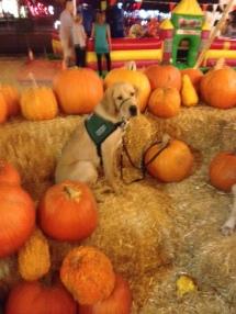 11-15 Brian Pumpkin Patch