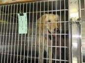 Puppy Truck 6-15 (14)