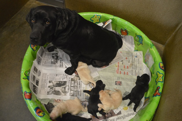 Solo and Hilda Litter