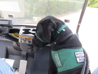Buckley riding in the golf cart