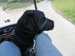 Tee Off For Dogs golf cart ride
