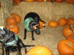 Pumpkin Patch 2015 (10)