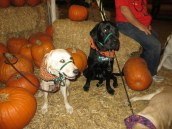 Pumpkin Patch 2015 (13)