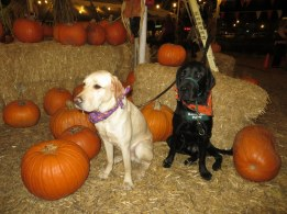 Pumpkin Patch 2015 (17)
