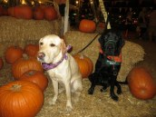 Pumpkin Patch 2015 (18)