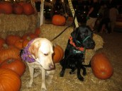 Pumpkin Patch 2015 (19)
