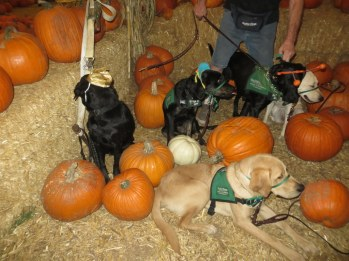 Pumpkin Patch 2015 (2)