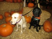 Pumpkin Patch 2015 (20)