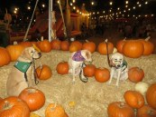 Pumpkin Patch 2015 (22)
