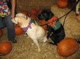 Pumpkin Patch 2015 (3)