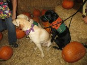 Pumpkin Patch 2015 (3)