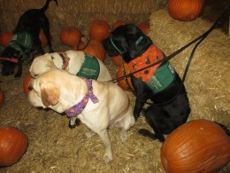 Pumpkin Patch 2015 (4)