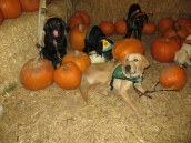 Pumpkin Patch 2015 (5)