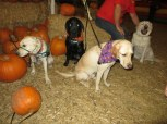 Pumpkin Patch 2015 (6)