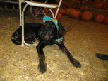 Pumpkin Patch 2015 (62)