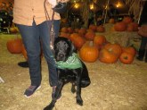 Pumpkin Patch 2015 (64)