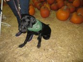 Pumpkin Patch 2015 (65)