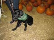 Pumpkin Patch 2015 (65)