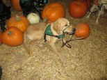Pumpkin Patch 2015 (8)