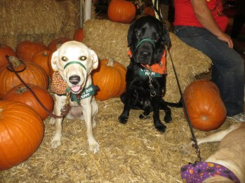 Pumpkin Patch 2015 (9)