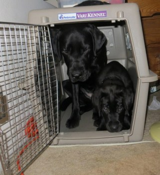 Buckley and Fisher in the kennel