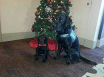 Buckley and Fisher Christmas
