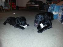 Fisher and Buckley - Day 1
