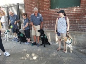 GDB Puppies in Training Travel Day 2016-002