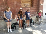 GDB Puppies in Training Travel Day 2016-003