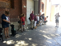 GDB Puppies in Training Travel Day 2016-004