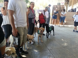 GDB Puppies in Training Travel Day 2016-005