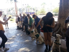 GDB Puppies in Training Travel Day 2016-006