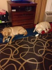 Brian and Mobley in hotel