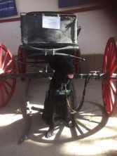 Rancher in Yuma for Fun Day