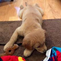 Dominique's first day - 11 weeks old