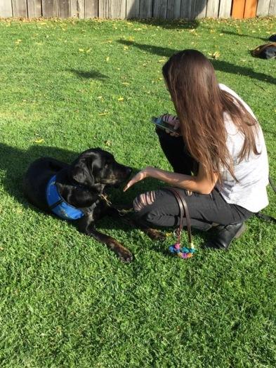 Aiden graduation as Dogs 4 Diabetics