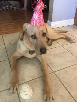 Hackett 1 year old
