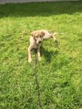 Hackett in the grass